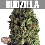 Budzilla-Text