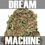 Dream Machine-Text
