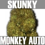 Skunky Monkey-Text